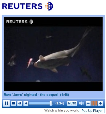 Reuters-Goblin-Shark070208